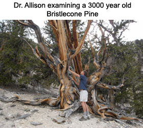 Research and Case Studies | Allisontree | Tree Decay Detection