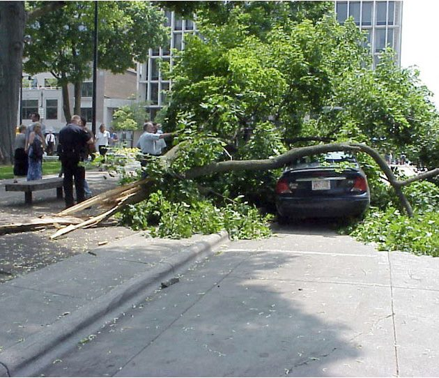 In 2005, there were several dramatic instances of Norway maples around the capitol falling in highly populated public areas.