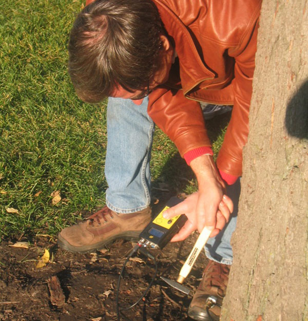 Placing two sensors on opposite sides of the tree trunks, Allison measured the speed of sound waves sent between them.