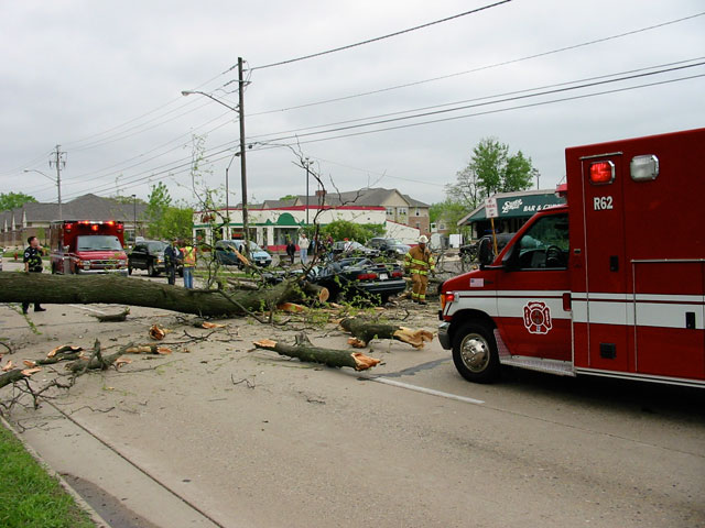 In May 2005, unusual wind direction and higher-than-normal wind velocity caused a 30-inch diameter honey locust to lean over a busy road in Monona, Wisconsin.