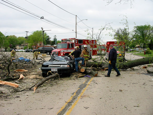The tree fell unexpectedly during rush hour traffic, crushing a car and killing the driver.