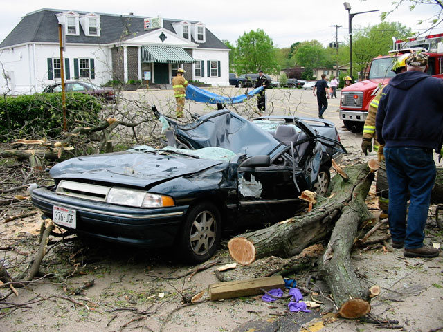 The city of Monona contracted with Allison to determine the cause of the tree failure.
