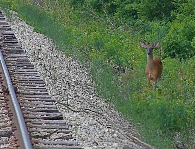 Allison was interested in conducting an experiment to determine how Wisconsin's ecology had changed since Thoreau's trip more than 150 years earlier. Allison followed the same existing railroad corridor.